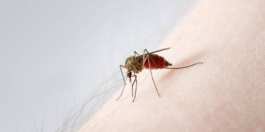 Atasi Gatal-gatal Akibat Gigitan Nyamuk Dengan 2 Bahan Alami Ini